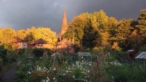 Sunset at the allotments Oct 13 2013